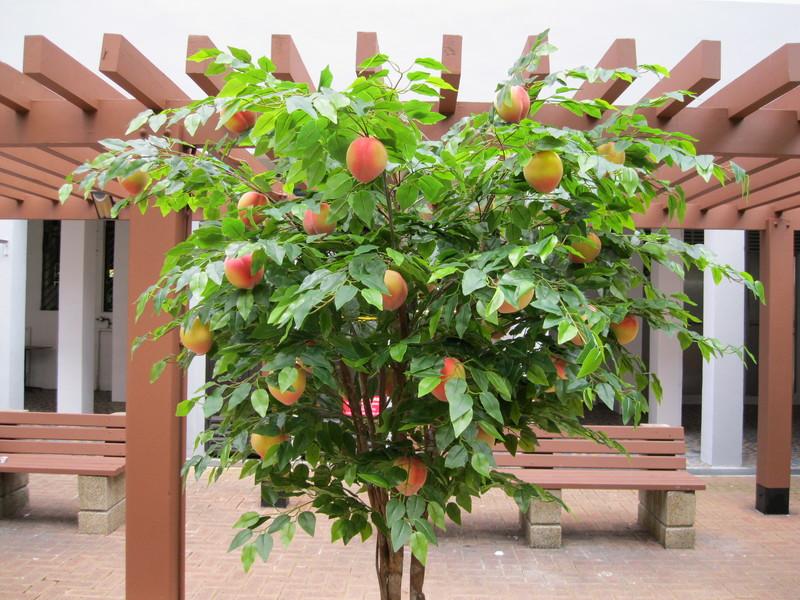 Всё о прививках персика