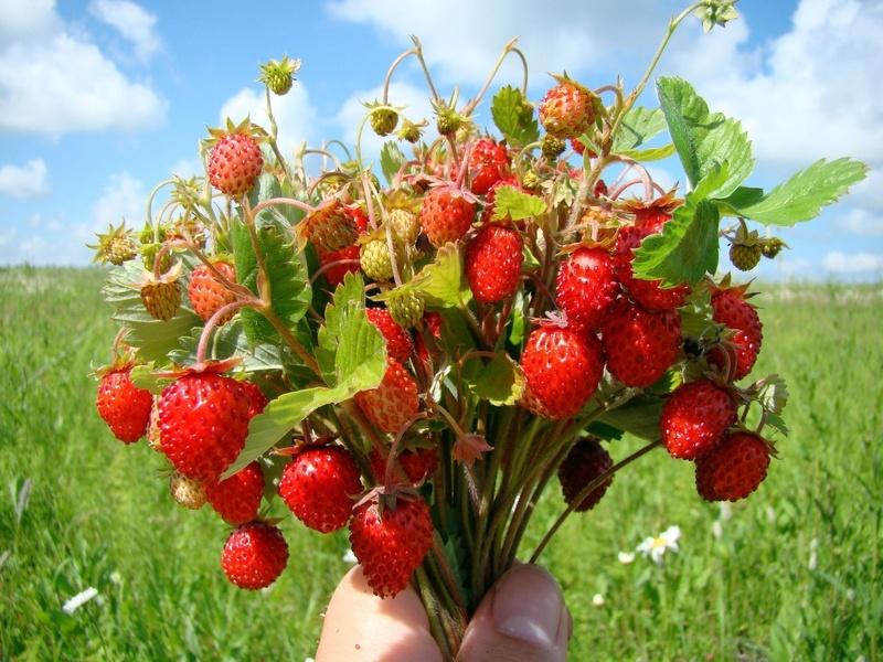 Актуальные статьи в июне: успеваем с работами в саду-огороде и радуемся урожаю