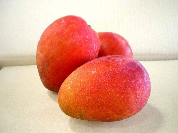 Сорт манго Ивон