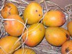 Маленькие оранжево-желтые манго