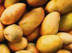 Крупные оранжевые манго