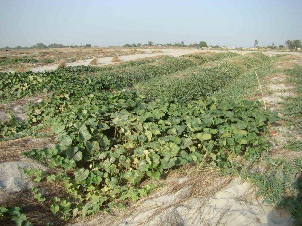 Подходящее место для выращивания арбузов