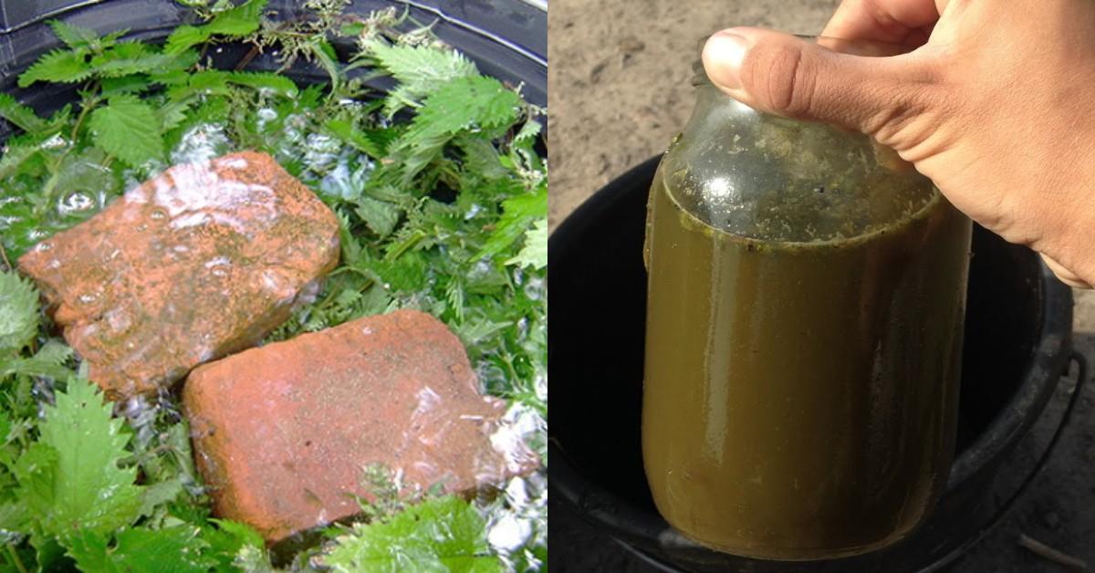 Что можно поливать настоем из крапивы на огороде, и как его приготовить