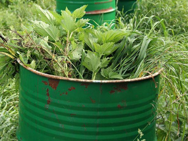 Трава для «зелёного» удобрения