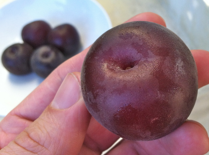 Необычные чёрные абрикосы: лучшие сорта, посадка и уход