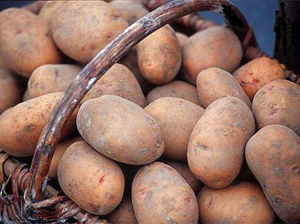 Осенний картофель
