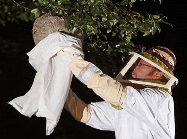 Уничтожение осиного гнезда
