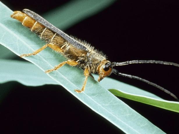 насекомое на листе растения