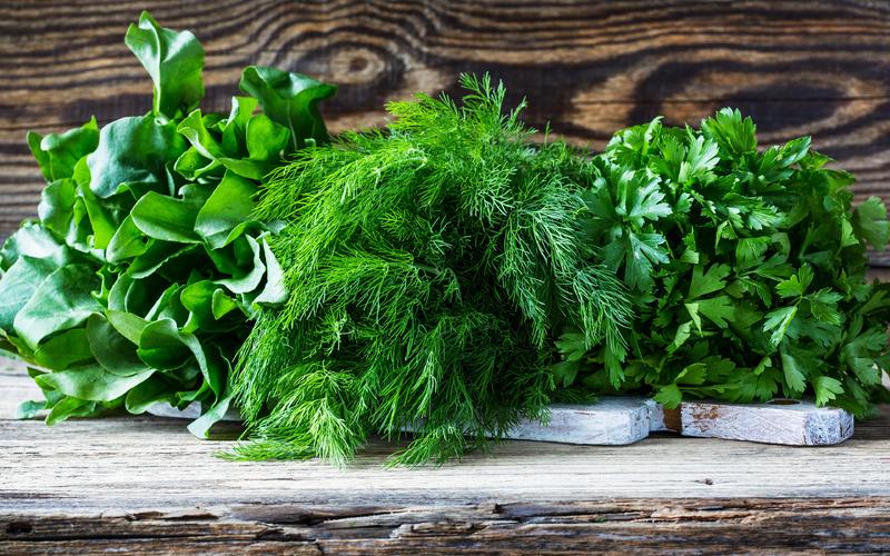 Зелёные витамины: укроп, петрушка и кинза – что полезнее?