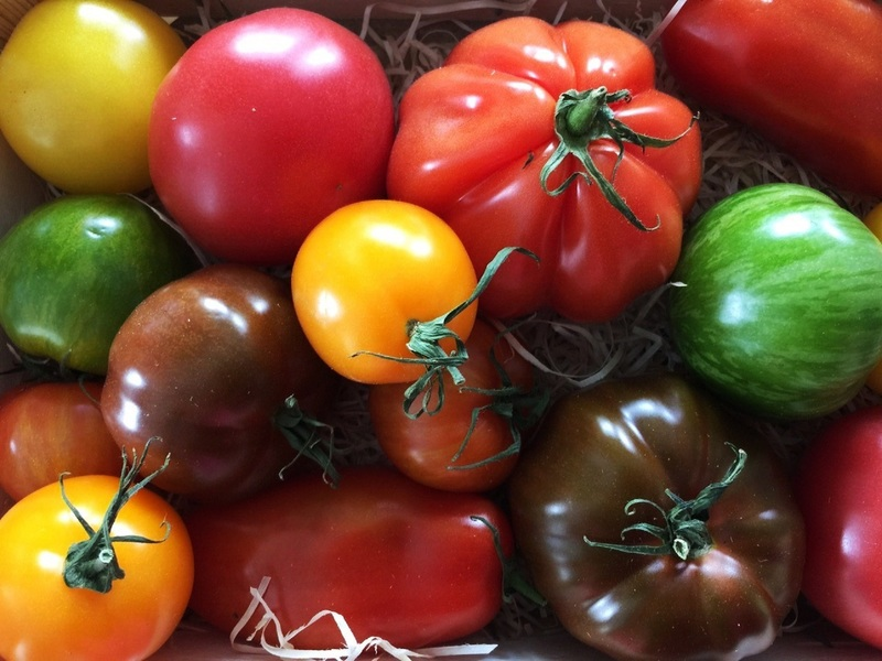 Радуга на грядке: разноцветные томаты - где больше пользы?