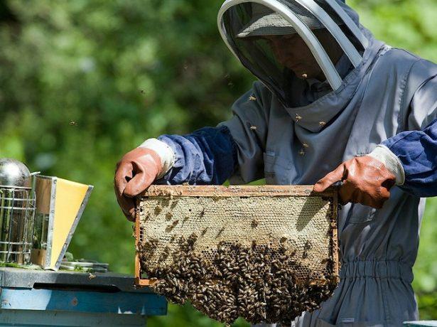 Европейский пчеловод