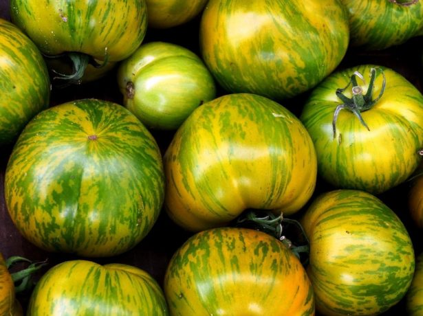 Зеленоплодные томаты
