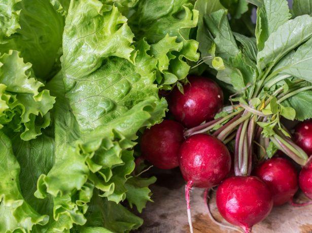 Редис и салат