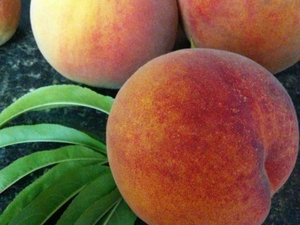 Плоды персика сорта Ветеран