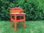 Обрезка красной смородины после сбора урожая: основные правила и подробные инструкции