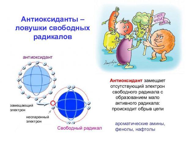 Схема действия антиоксидантов
