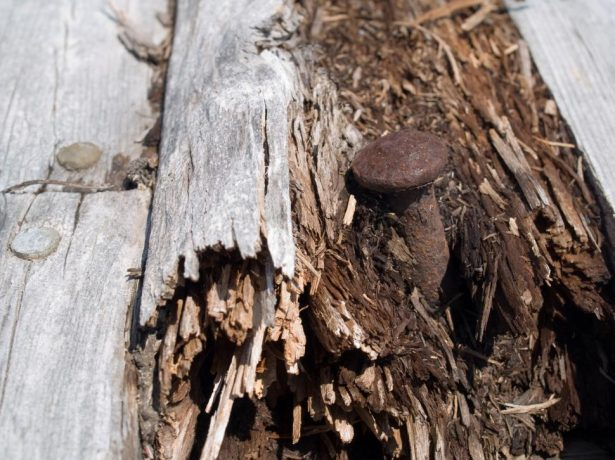 Прогнившая в погребе древесина