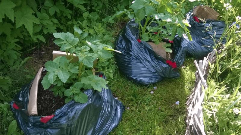 Самый быстрый компост — в мешках для мусора