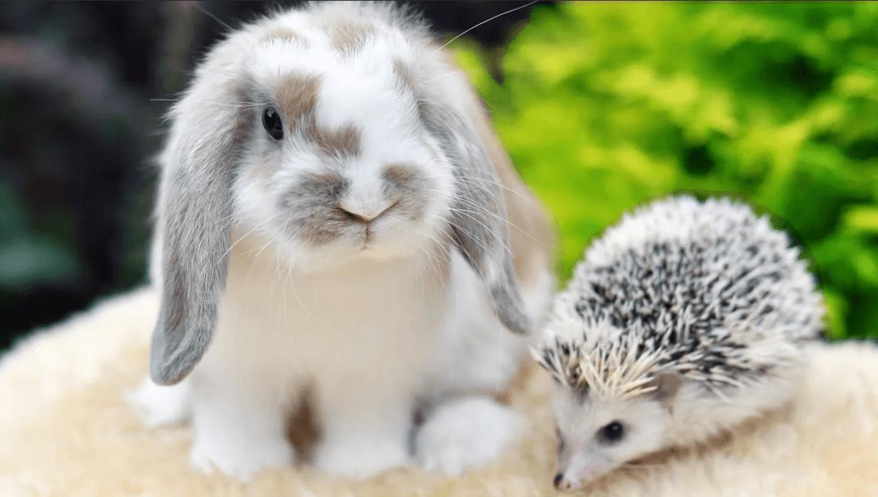 кормление карликовых кроликов