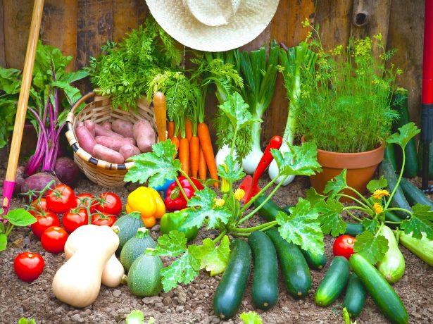 Урожай с огородов