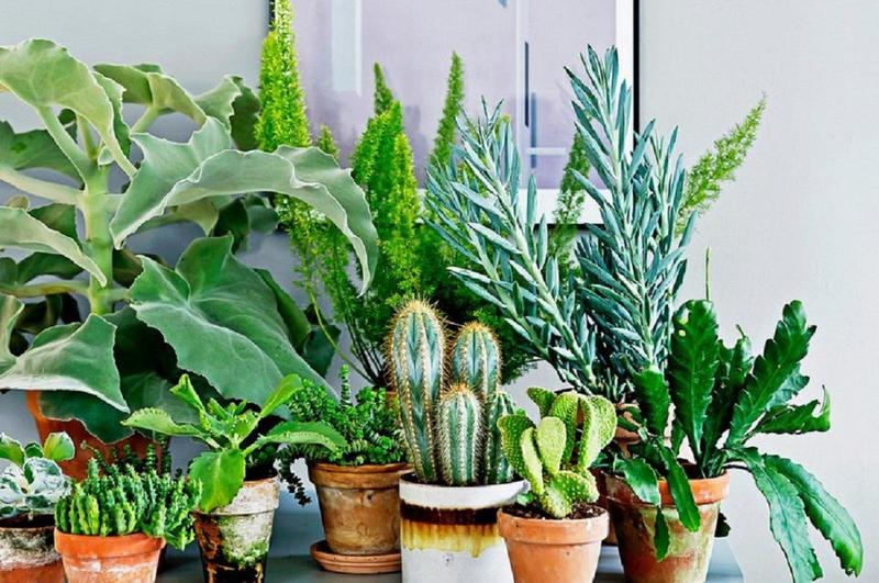 10 комнатных растений, которые мы постоянно называем чужими именами