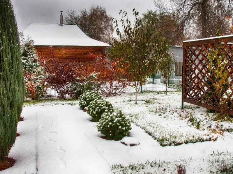 Зимой и летом: 10 растений, которые порадуют вас красотойв снежную пору