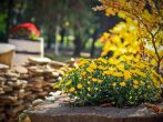 «Осенние» комплексные удобрения для садовых культур