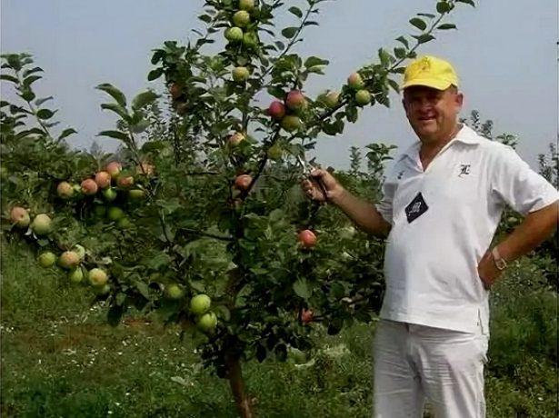 Человек рядом с карликовой яблоней