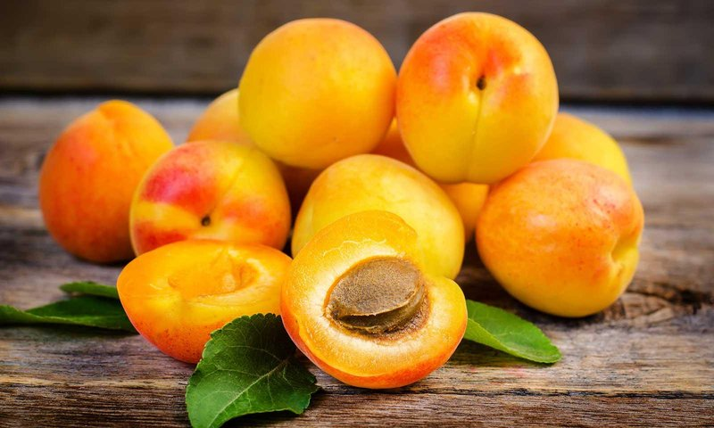 Выбираем подвои для абрикоса: сильнорослые, карликовые и полукарликовые