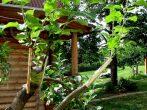Подвой для яблони — основа успешного выращивания плодового дерева