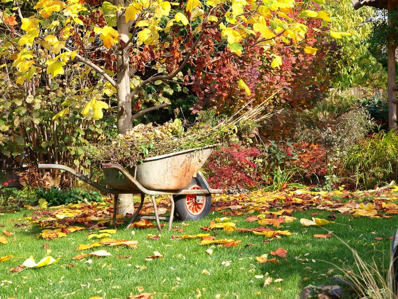 Подготовка сада и огорода к зиме после сбора урожая: необходимые осенние работы и сроки их проведения