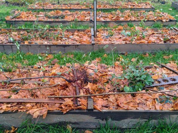 Укрытие гряд листьями