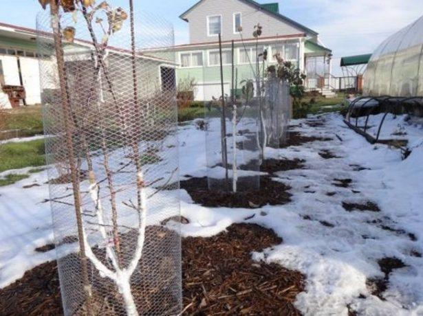 Металлическая сетка для ограждения деревьев