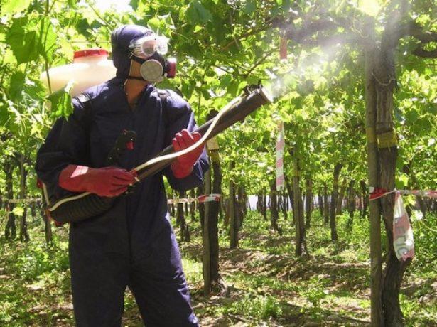 Опрыскивание виноградных лоз