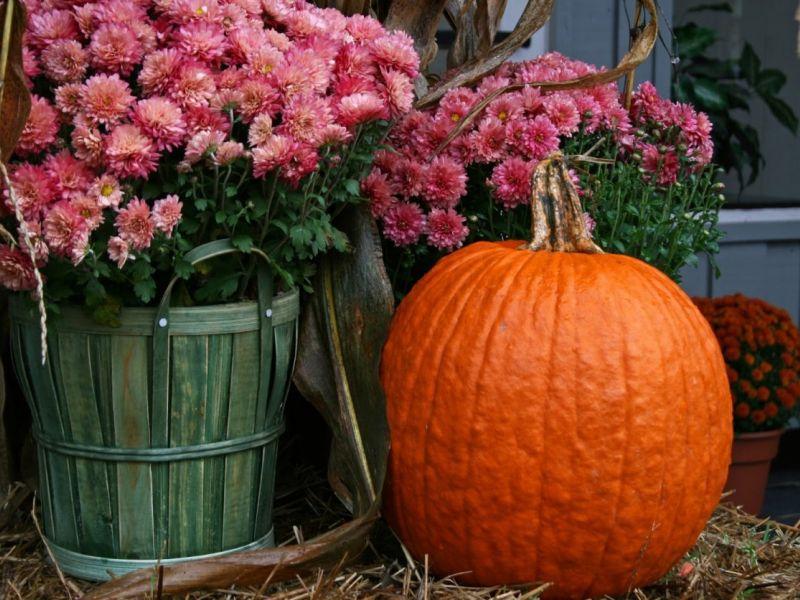Осенние цветы в саду: культуры, цветущие в сентябре, октябре, ноябре и даже при заморозках
