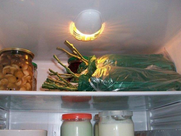Хранение роз в холодильнике