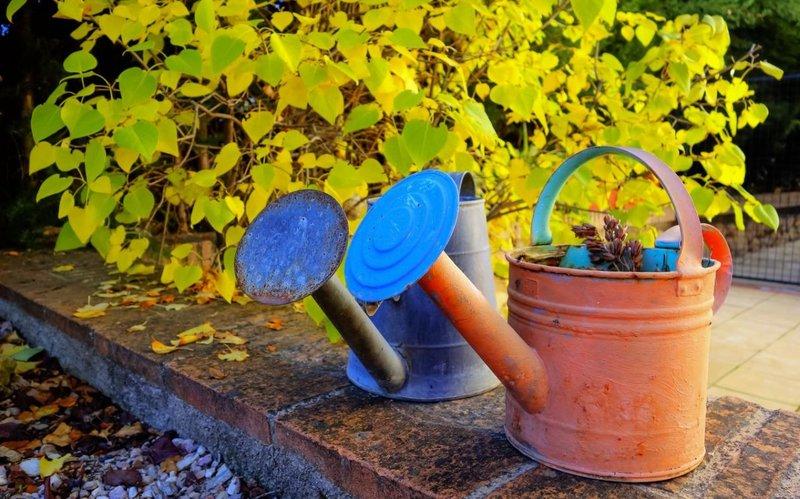 Подзимний полив сада: когда и как провести его правильно