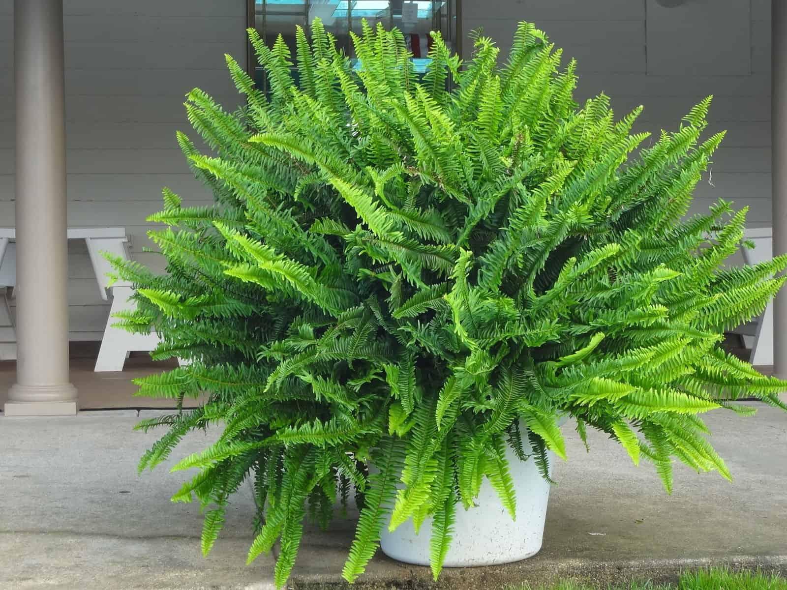 NASA одобрило: 10 лучших растений для очистки воздуха в вашем доме