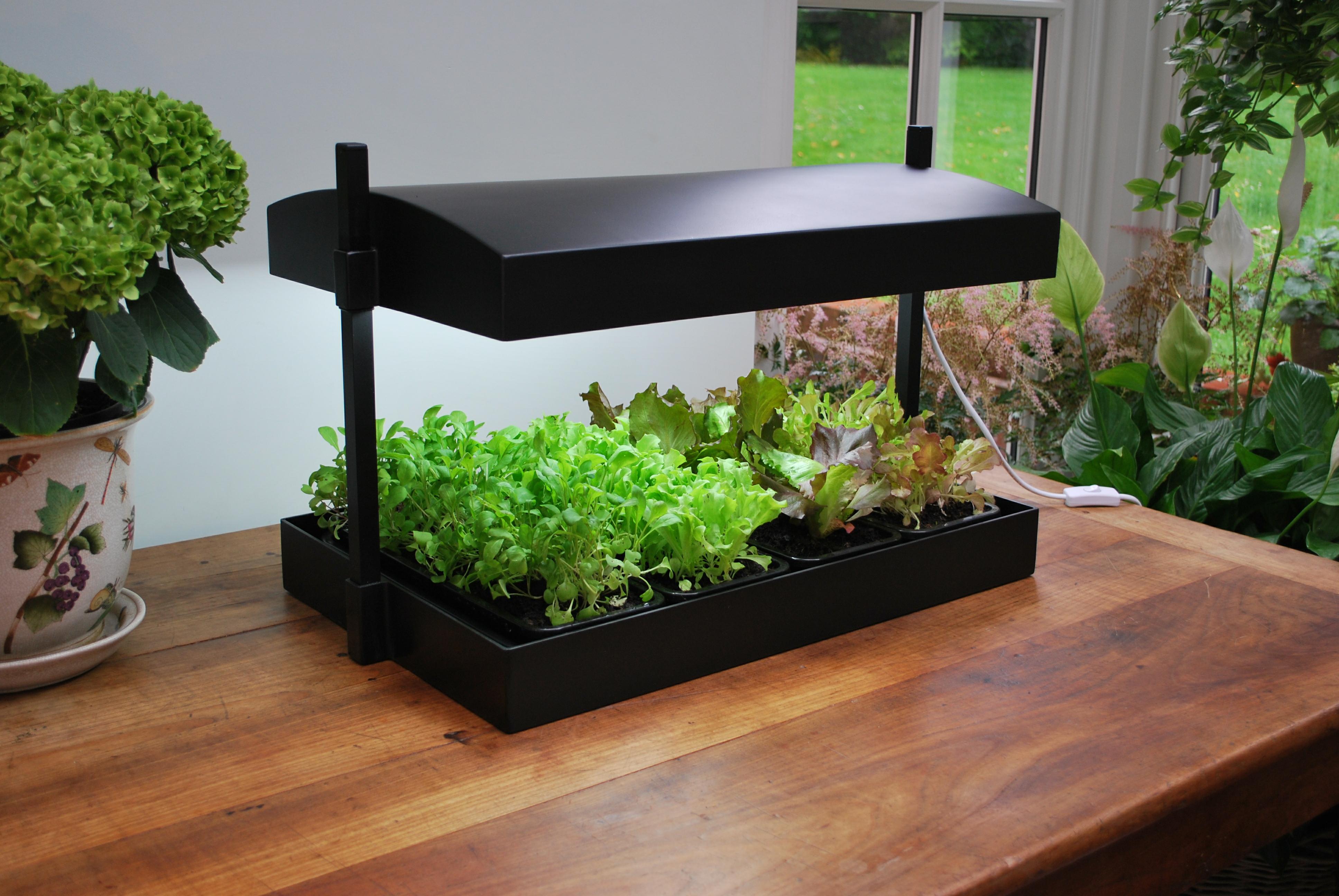 9 умных приборов, которые помогут вам создать роскошный огород в доме