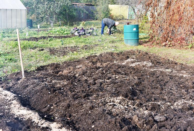 Восстанавливаем плодородие земли: 6 удобрений, которые нужно вносить под перекопку осенью