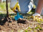 Как правильно подобрать растения для оформления пруда на участке