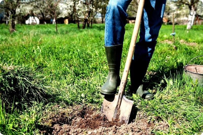 Напрасный труд: 6 вещей, которые вы делаете в огороде зря
