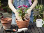 5 очевидных причин, почему ваши растения гибнут во время пересадки