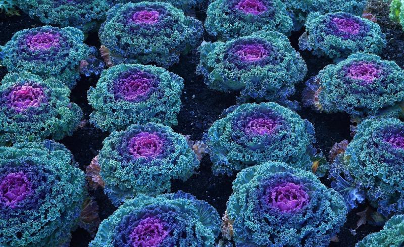 9 цветов, которые будут украшать ваш сад до самых заморозков
