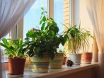 9 причин завести дома как можно больше комнатных растений