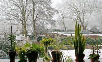 Как подготовить домашние растения к зиме: 8 полезных советов