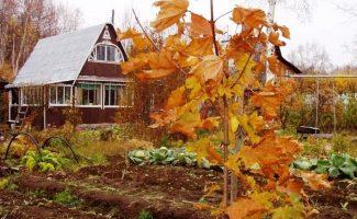 7 простых советов по подготовке дачи к зиме