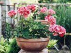 9 растений на даче, от которых стоит держаться подальше