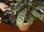 8 натуральных подкормок для домашних растений, которые улучшат их рост