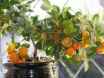 11 растений для подъезда к дому, которые сделают территорию ухоженной